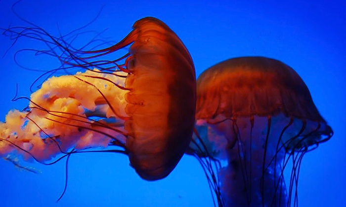 Georgia Aquarium In Atlanta Ga Groupon