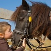 Up to 63% Off Horseback Riding