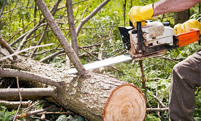 Stumped - Fort Worth: $75 for Up to Three Man-Hours of Tree Trimming, Tree Removal, or Stump Grinding from Stumped (Up to $225 Value)