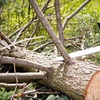 Up to 67% Off Tree-Care Services from Stumped