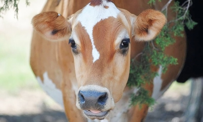 Sand Creek Farm - Burlington: Farm Tour with Cheese and Yogurt Tasting for Two or Four at Sand Creek Farm (Up to 25% Off)