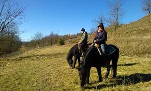 La Ratatouille (Dego): Passeggiata a cavallo con in più 3 o 5 lezioni di equitazione da 9,90 €