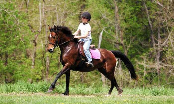 Different Times Equestrian Ventures - Gansevoort: $45 for $80 Worth of Horseback Riding — Different Times Equestrian Ventures