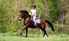 43% Off at Different Times Equestrian Ventures