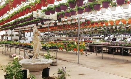 $25 for $40 Worth of Plants at Ludema's Floral & Garden