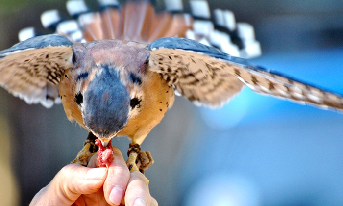 Wings to Soar - Lookout Valley - Lookout Mountain: Interactive Raptor Experience for Two or Four at Wings to Soar (Up to 51% Off)