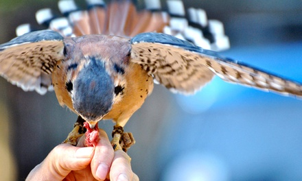 Interactive Raptor Experience for Two or Four at Wings to Soar (Up to 51% Off)