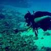54% Off Scuba Certification at Poseidon's Divers