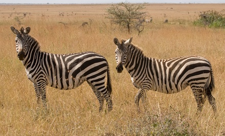 groupon daily deal - ✈ 10-Day African Safari with Airfare from Odyssey Safaris. Price/Person Based on Double Occupancy.
