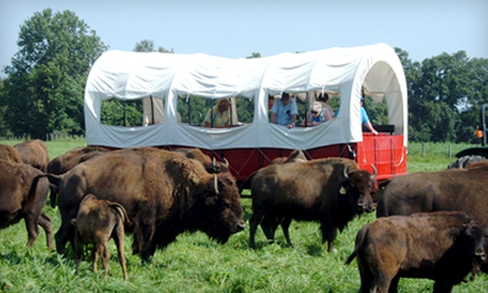 Cook's Bison Ranch - Johnson: Bison-Ranch Tour for Two, Four, or Six at Cook's Bison Ranch (Up to 50% Off)