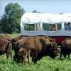 Up to 50% Off Bison-Ranch Tours