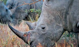 Two Or Four Admissions To The Save The Rhino Party From Project Rhino Charleston (up To 52% Off)