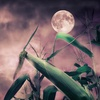 Up to 52% Off Haunted Barn and Hayride
