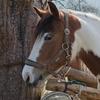 45% Off Horseback Riding