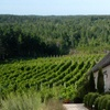 Up to 36% Off Tour and Tasting at Petite Riviere Vineyards