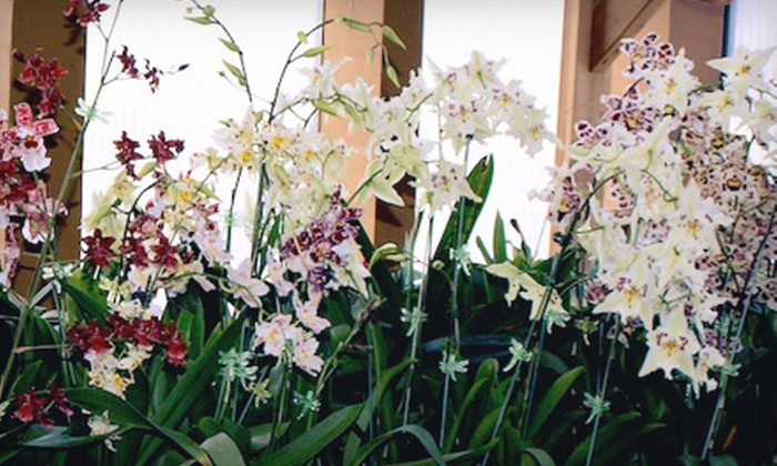 New Earth Orchids - Santa Fe: $15 for $30 Worth of Orchids at New Earth Orchids