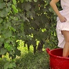 Up to 56% Off at 2013 Grape Stompin' Wine Festival