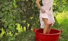 Grape Stompin' - Newberry-Archer: 2013 Grape Stompin' Wine Festival for One or Two at Tioga Town Center on August 24 or 25 (Up to 56% Off)