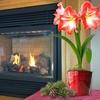Amaryllis Bulbs with Decorative Pots