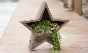 Decorative Reclaimed Wood Star Planter with Living Succulent Plants