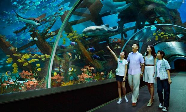 S.E.A. Aquarium & Adventure Cove 2