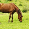 45% Off Month of Pasture Horse Boarding