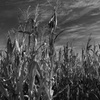 Up to 51% Off at Heaps Haunted Corn Maze