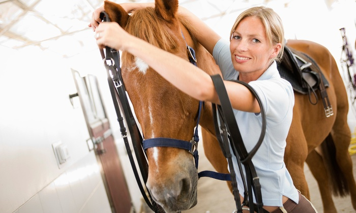 Briarcliff Performance Horses - Paleface Ranch: One or Three 90-Minute Horsemanship Lessons at Briarcliff Performance Horses (Up to 60% Off)