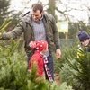 50% Off at Santa & Mikey's Fresh Christmas Trees