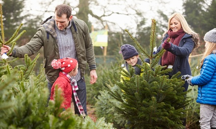 Home-Delivered, Locally Grown Six-, Seven-, or Eight-Foot Christmas Tree ( 50% Off)