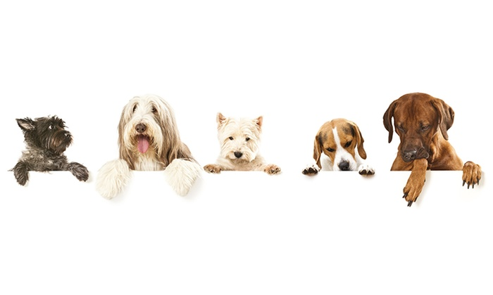 City of Vacaville Special Events Department - Andrews Park: $12 for Parade for One Dog at City of Vacaville Special Events Department on Oct. 31, 2015($20 Value)