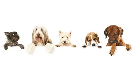 Sesión de peluquería canina desde 9,90 € en El Pastor Alemán
