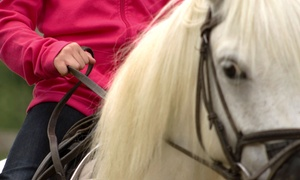 Adventures in Riding with Miss Julie: 60-Minute Horseback-Riding Lesson for One or Two at Adventures in Riding with Miss Julie in Arlington (Up to 51% Off)