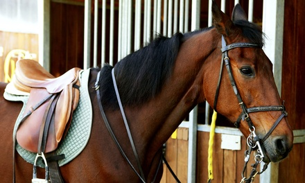 One or Two 60-Minute Horseback-Riding Lessons at Horseman's Hangout (Up to 52% Off)