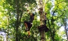 Adventure Creek - Coraopolis: Adventure Course for Two Adults, or Two Adults and Two Children at Adventure Creek (Up to 32% Off)