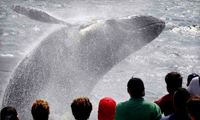 A Cape Ann Whale Watch - Gloucester: $58 for Whale-Watching Cruise for Two from A Cape Ann Whale Watch ($96 Value)
