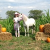 Up to 54% Off Family Fall Festival Outing