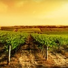 51% Off Savings Card for Wineries, Dining, Hotels & Golf