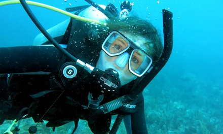 Open-Water Certification Course with Option for Nitrox or Two-Tank Dive at Paradise Below Diving (Up to 58% Off)