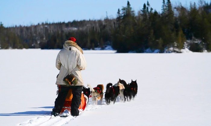 White Wilderness Sled Dog Adventures - White Wilderness Sled Dog Adventures: Traditional Dogsledding Trip and/or Yurt Escape from White Wilderness Sled Dog Adventures (Up to 50% Off)