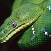 50% Off Reptile and Exotic Animal Show