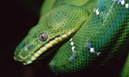 One- or Two-Day Visit for Two or Four to Pacific Northwest Reptile & Exotic Animal Show (50% Off)