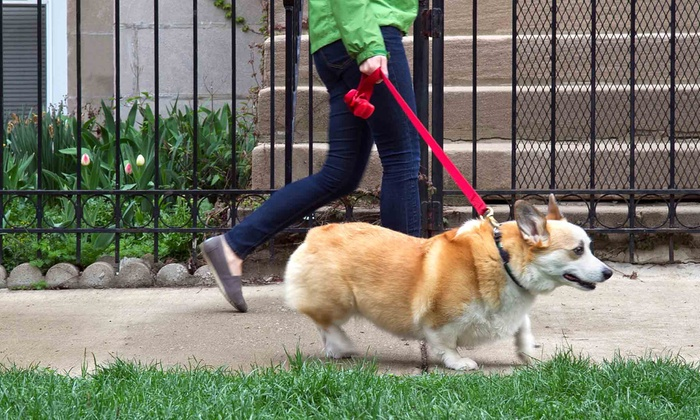 Bts Services - Central Jersey: 10 or 20 Half-Hour Dog Walks from BTS Services (Up to 75% Off)