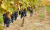 Up to 44% Off Tour and Tasting at Montoliva Vineyard & Winery