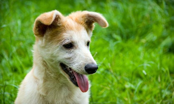 A-V.I.P. Pet Resort - Enterprise: One Night of Dog Boarding (a $20 value)