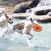 Up to 68% Off Cat or Dog Boarding