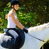 Up to 55% Off at White Training Stables