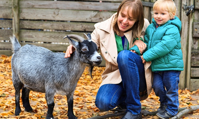 Old Macdonald's Farm - Brentwood: Old MacDonald's Farm: Entry For One or Family of Five from £6 (Up to 48% Off)