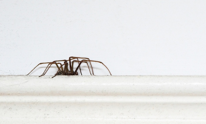 Ant Mary's Pest Control - Sombra Del Monte: $39 for Interior and Exterior Pest Control Treatment from Ant Mary's Pest Control ($80 Value)