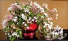 White Flower Farm: $28 for a Potted Jasmine Plant Delivered from White Flower Farm ($57.95 Value)